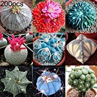 Plantas suculentas/crasas